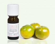 Mandarinier feuillage et fruit